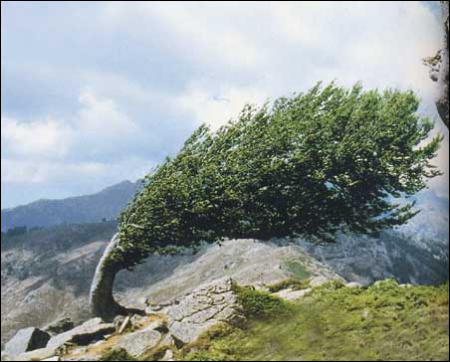 L'air est sec et le ciel est pur. Quel est le vent qui souffle ?