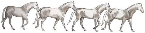 Le cheval peut adopter une certaine...