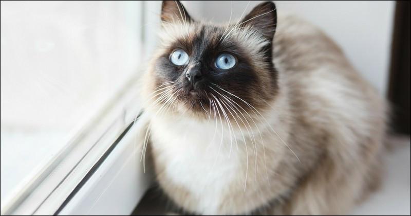 Quel est ce chat ?