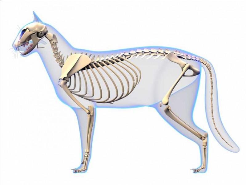 En moyenne, de combien d'os est constitué leur squelette ?