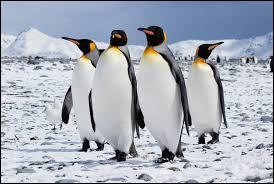 """Qui a écrit """"L'Île des Pingouins"""" ?"""