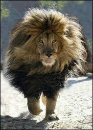 Le lion de l'Atlas est l'emblème du/de :
