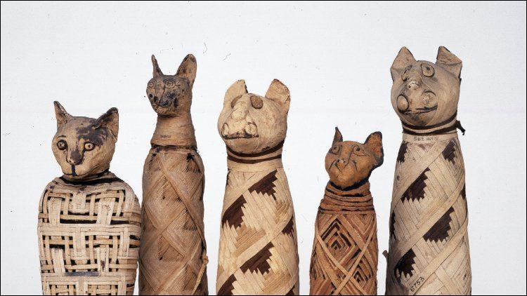 Les Égyptiens de l'Antiquité vénéraient les chats comme des dieux. Ils en possédaient beaucoup. En 1888, combien de chats momifiés ont-ils été découverts dans une nécropole ?