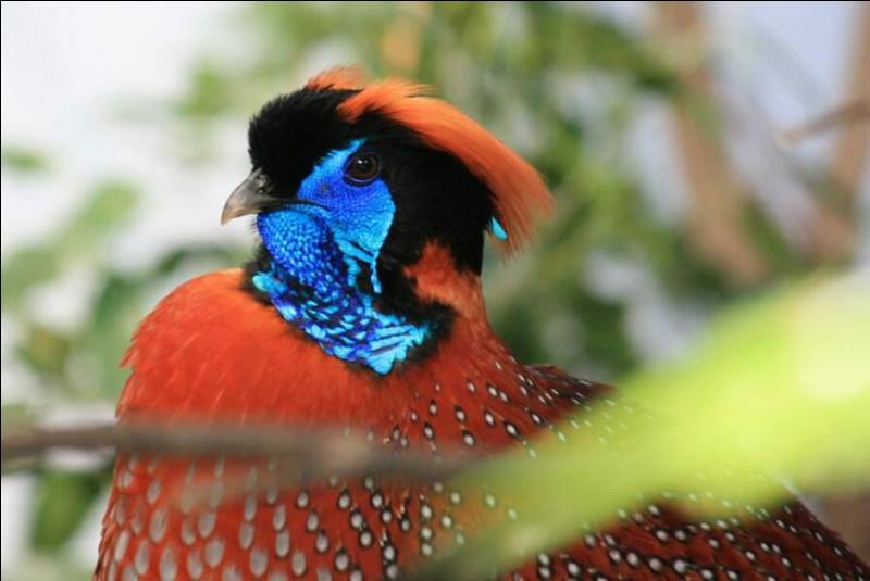 Comment s'appelle cet oiseau ?