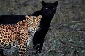 Ces animaux sont...