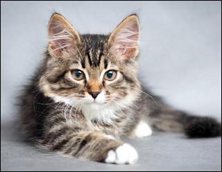 Quel animal est-il ? Vous l'avez sûrement reconnu si vous avez vu ma photo de profil.
