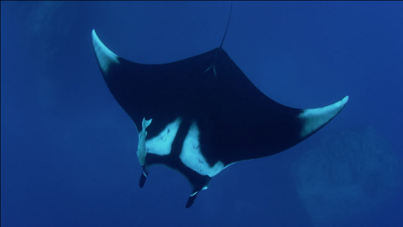 Quel est cet animal marin ?