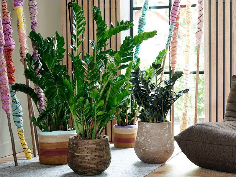 Je vous laisse quelques minutes, je dois aller soigner mes plantes, d'aucuns disent que j'ai la ... !