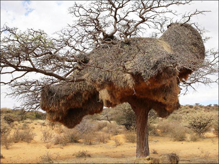 Bon sang, mais qui peut bien construire un nid aussi monstrueux ?