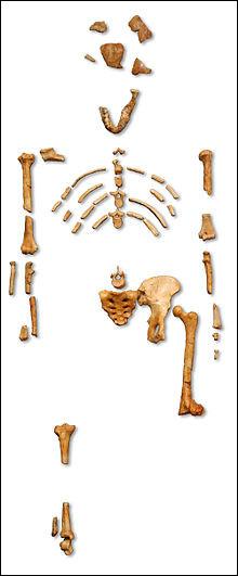 Ère Cénozoïque, période Néogène, commence la séparation des hominidés. En 1974, en Éthiopie, est découvert un australopithèque datant de plus de 3 Ma. Quel est son nom ?