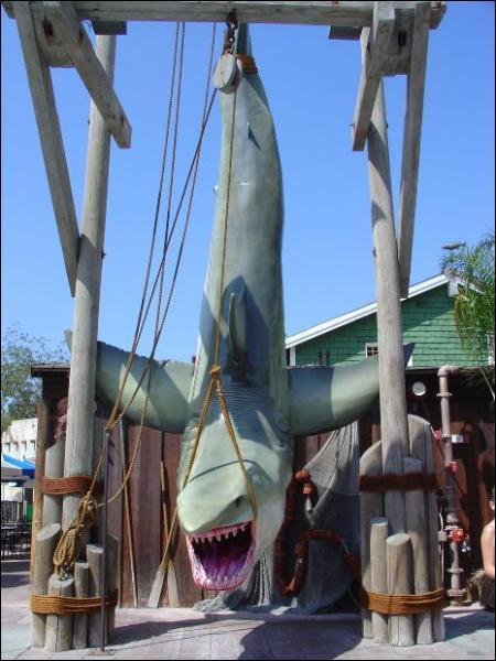 Les requins sont-ils en voie d'extinction ?