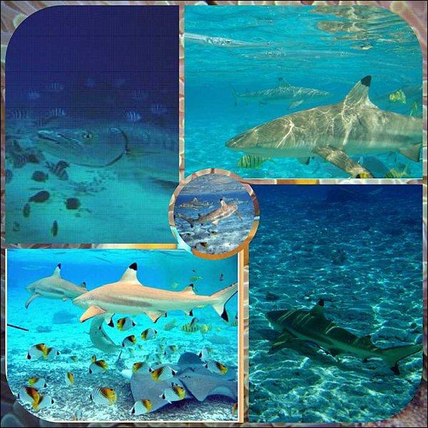 Où vivent les requins ?