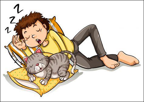 Qui sont les partenaires de sieste ?