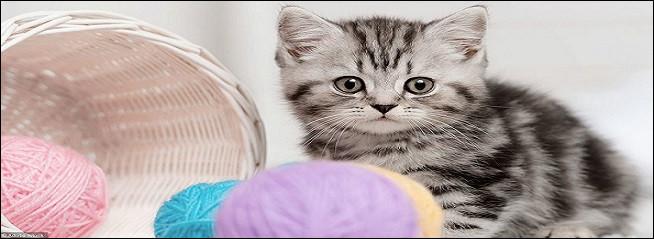 L'oseille et les épinards à la crème, que votre chat aimerait bien goûter et en faire son repas du dimanche, sont-ils bons pour son organisme ?