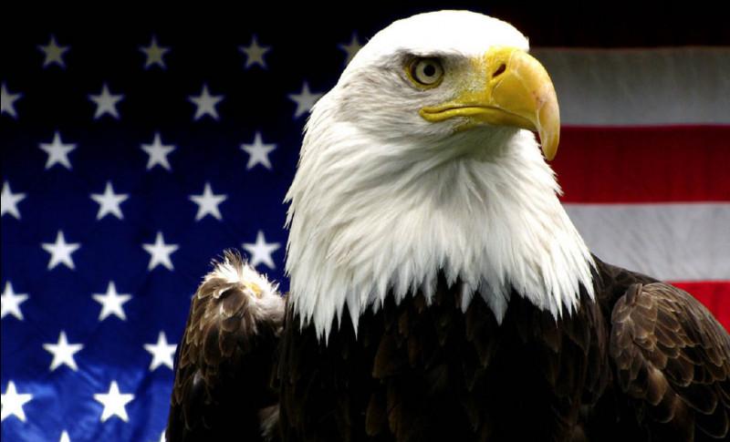 Quel espèce d'aigle est l'oiseau emblème des États-Unis ?