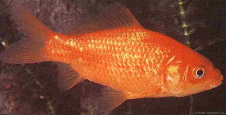 Quizz les magnifiques poissons quiz poissons for Poisson rouge a donner
