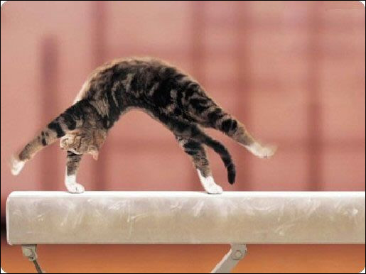 Gymnastique. Agrès voisin de la poutre en Belgique :