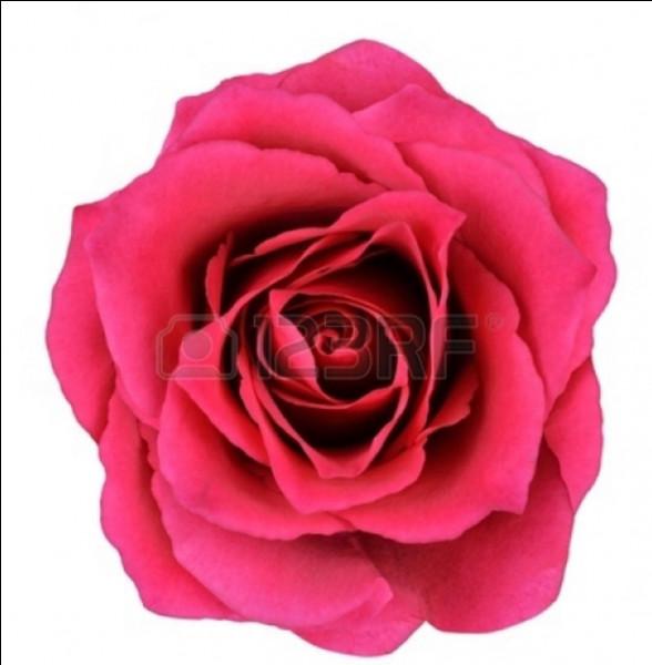Cette photo représente une fleur. Laquelle ?