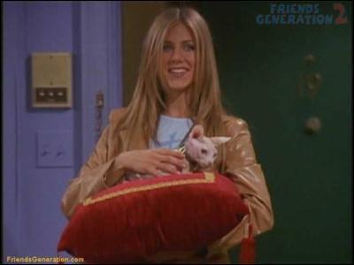 Quel est le prénom du chat de Rachel ?