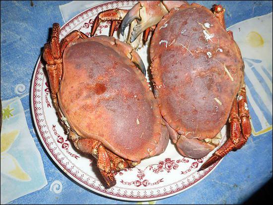 Cr comme crabe : la chair duquel est réputée meilleure ?