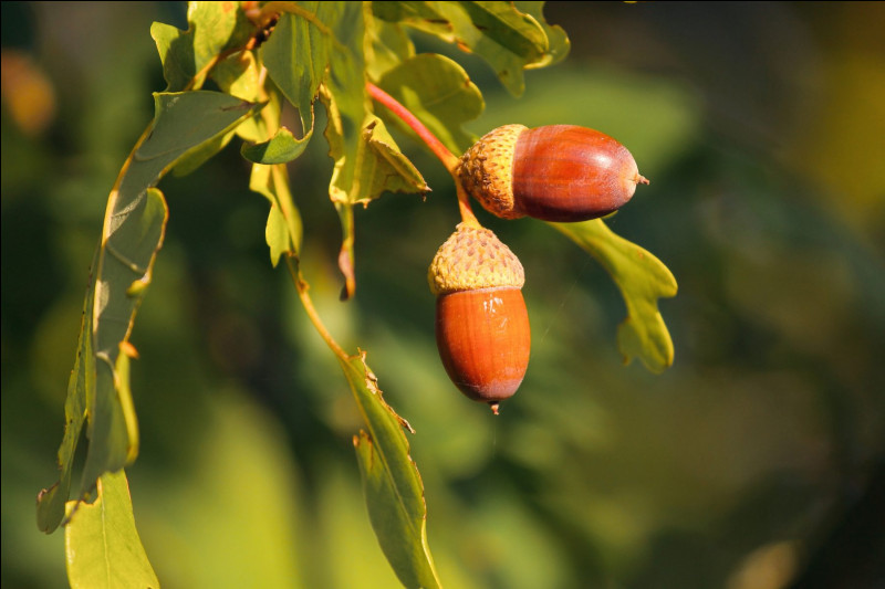 On commence facilement, avec ce fruit que l'on connaît tous !Bien sûr, il s'agit :