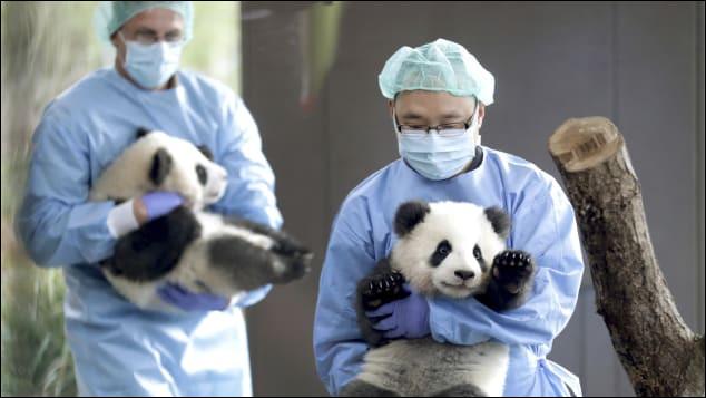 Lequel de ces faits est exact sur le panda en Chine ?