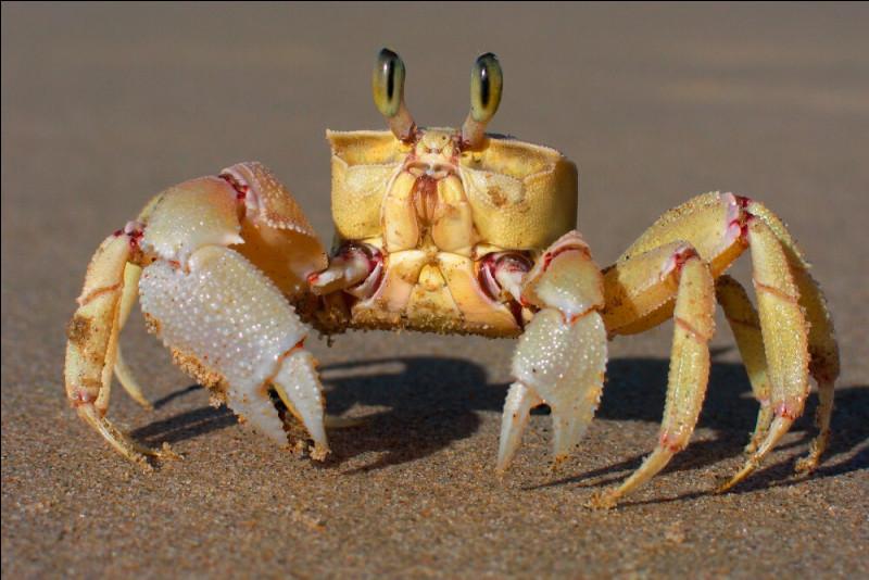 De quoi le crabe est-il le symbole dans la tradition chinoise ?