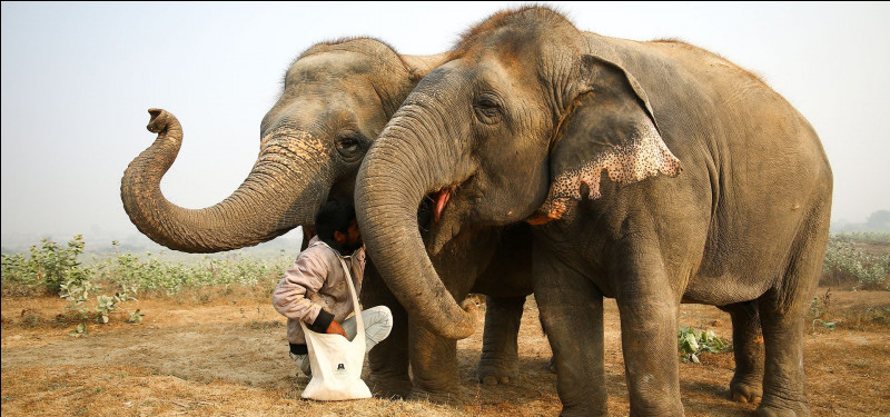 De quoi l'éléphant est-il le symbole dans la tradition chinoise ?
