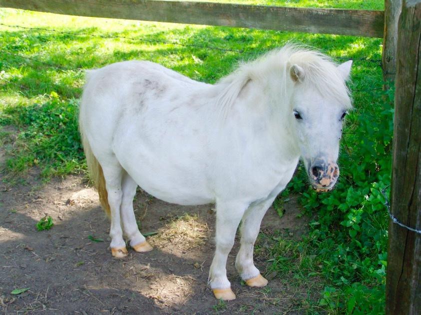 Quelle race de poney es-tu ?