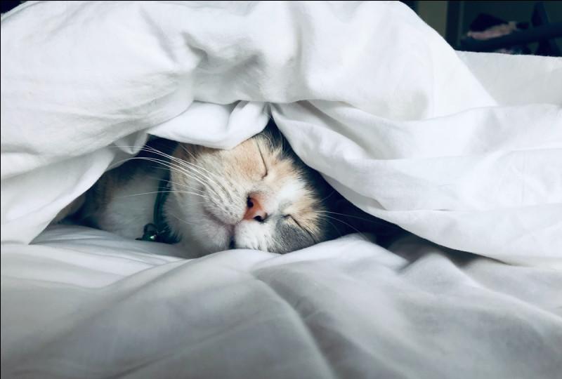 Comment dit-on ''oreiller'' en anglais ?