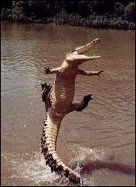 Pourquoi met-on les crocodiles en prison ?