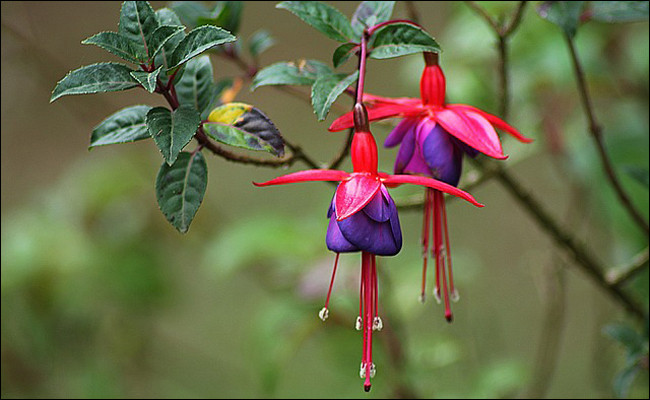 Comment allez-vous orthographier le nom de cette plante-fleur ?