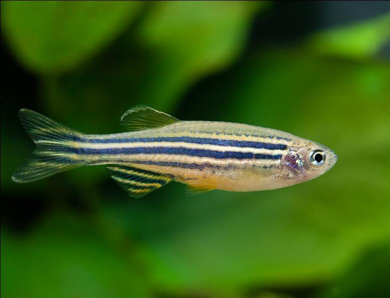 Et celui-ci est un poisson-...