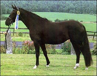 Quelle est, environ, la bonne distance pour présenter un cheval en main ?