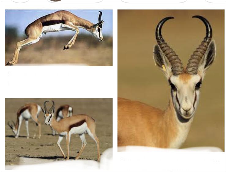 Parmi les animaux suivants, lequel peut se déplacer le plus rapidement ? après le guépard bien sûr