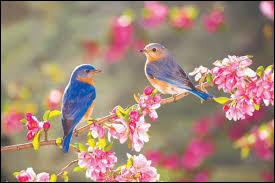 Le quiz du printemps !