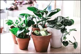 D'après une célèbre expression, quelle partie du corps est verte lorsqu'on s'occupe très bien des plantes ?