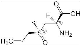 L'ail contient des sulfures d'allyle, qui peuvent être mortels si l'on en consomme plus de ...