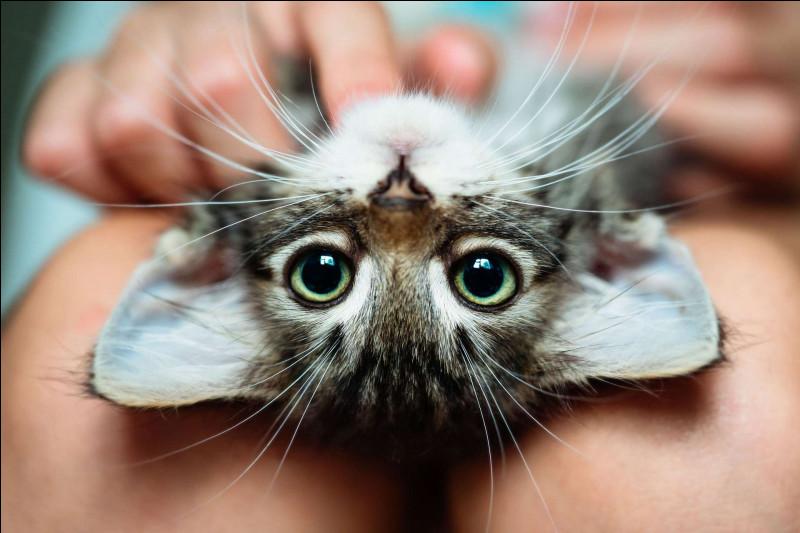 C'est un animal trop mignon !
