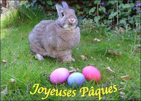 Quel est cet animal aux longues oreilles, vedette des fêtes de Pâques ?