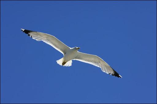 """""""Bleu, bleu, le ciel de ProvenceBlanc, blanc, blanc, le goélandLe bateau blanc qui danseBlond, blond, le soleil de plombEt dans tes yeuxMon rêve en bleu - bleu - bleu ...""""Qui chante """"Bleu blanc blond"""" en 1959 ?"""