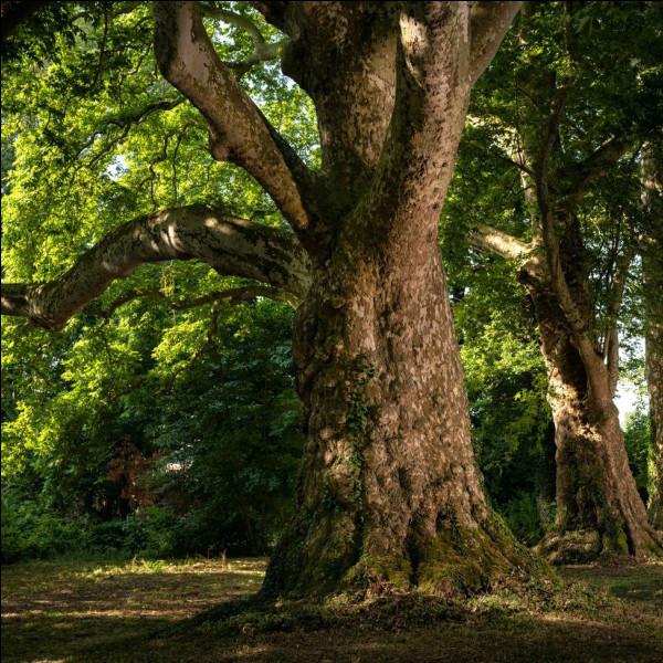 """Qui a écrit """"L'Homme qui plantait des arbres"""" ?"""