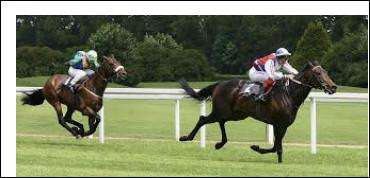 Pour que les courses de chevaux classiques soient les plus serrées possible, les chevaux portent un poids de façon à rééquilibrer leurs chances.