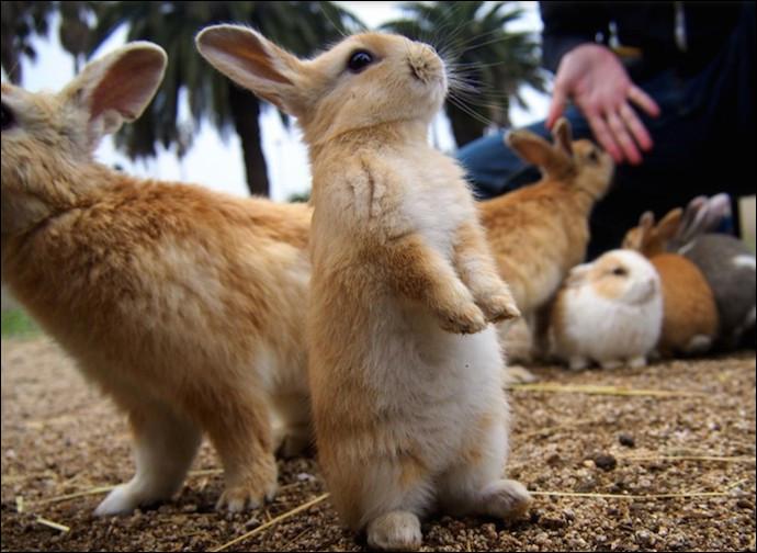 """Dans quel pays peut-on visiter """"L'île aux lapins"""" ?"""