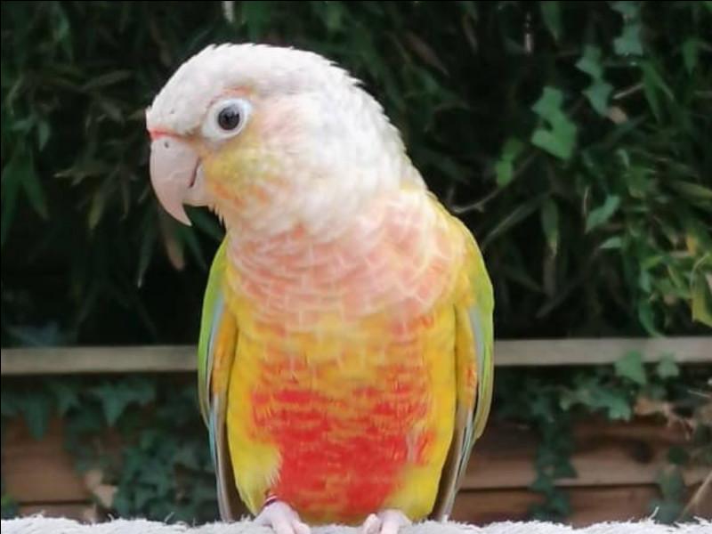 Cet oiseau est aussi associé au nom d'une fleur !