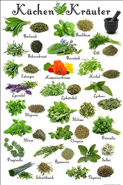 Les herbes aromatiques. Frigo ou pas frigo ?