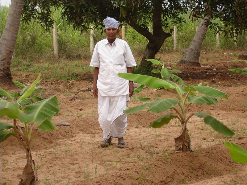 En Inde, vêtement traditionnel masculin :
