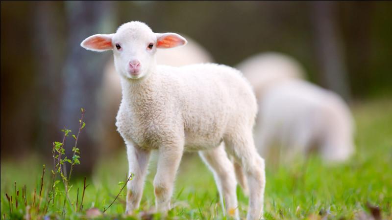 De quel animal est ce bébé ?