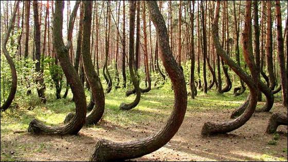 Non mais, sérieux, vous avez avalé ça, le coup du divin ? Que leur est-il arrivé, à ces pauvres pins et leur copains ?