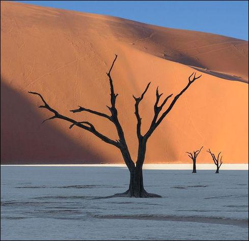 Jadis rivage fertile de la rivière Tsauchab, ces arbres millénaires de la Deadvlei ont séché sur place : on peut dire qu'ici, pas une ...